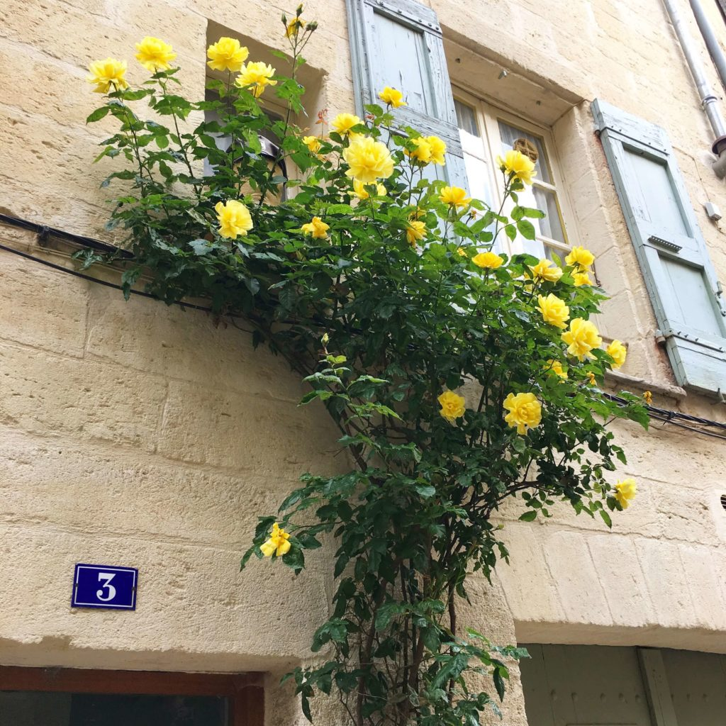 壁に花のある風景フランス